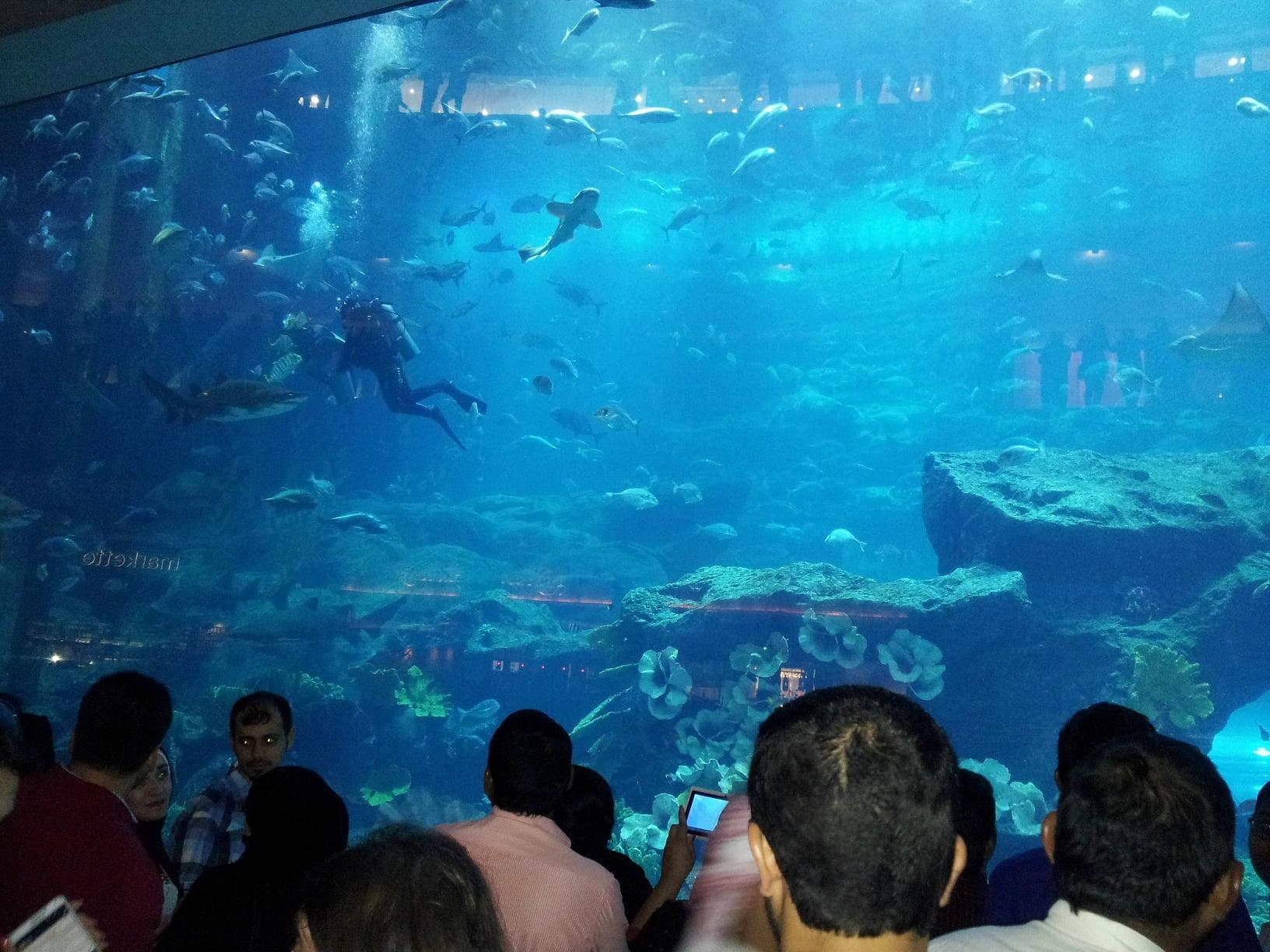 Dubai-travel-aquarium-Glimpses-of-The-World