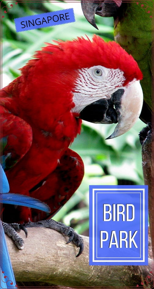 Singapore-travel-Jurong-Bird-Park-Glimpses-of-The-World