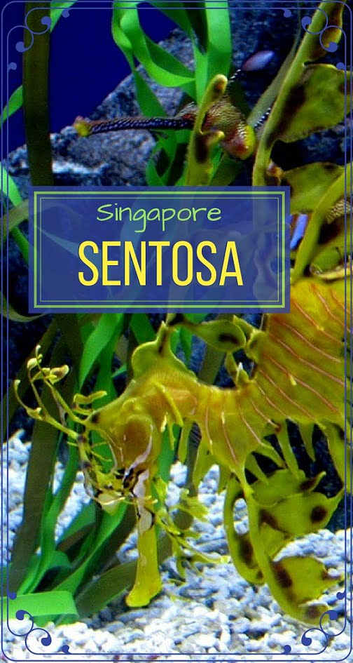 Singapore-travel-Sentosa-aquarium-Glimpses-of-The-World