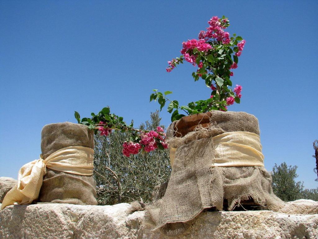Jordan: MOUNT NEBO AND JORDAN RIVER (5)