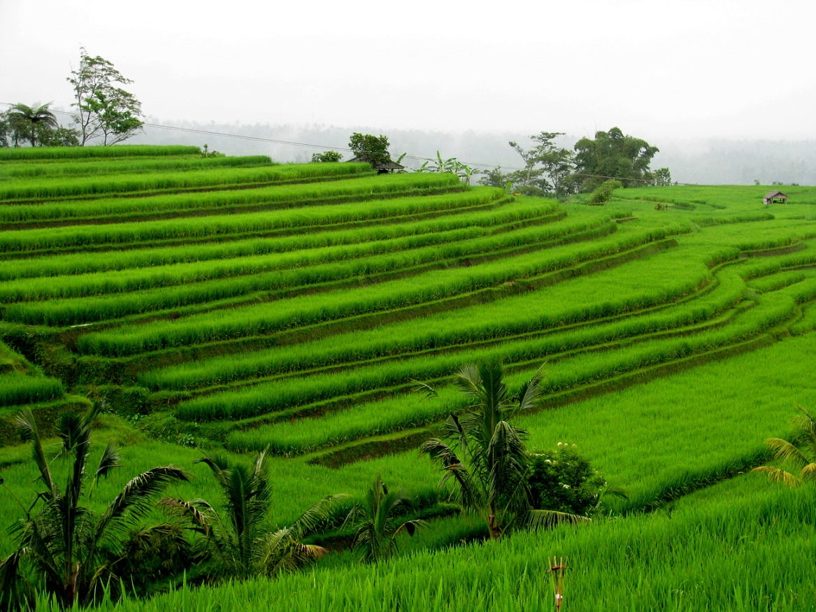 Bali Indonesia: FOOD, VOLCANO AND RICE FIELDS (7) - Glimpses of the World