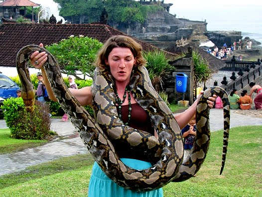 Travel-to-Bali-moving-python-Glimpses-of-The-World