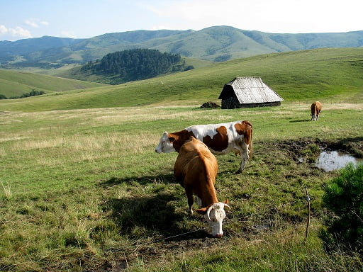 Serbia-travel-Zlatibor-Glimpses-of-The-World