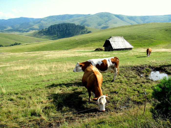Zlatibor-Serbia-travel-blog-Glimpses-of-the-World